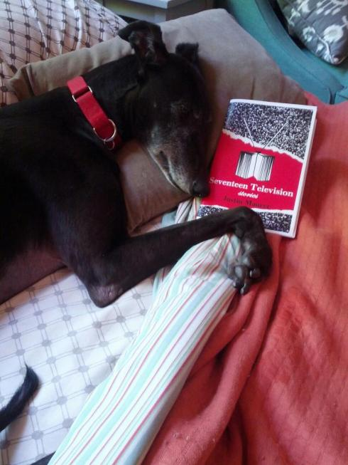 Writer Aaron Gilbreath's dog relaxing with a copy of my book
